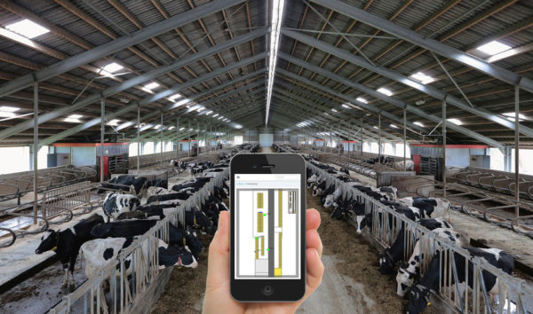 Cow Positioning with smartphone